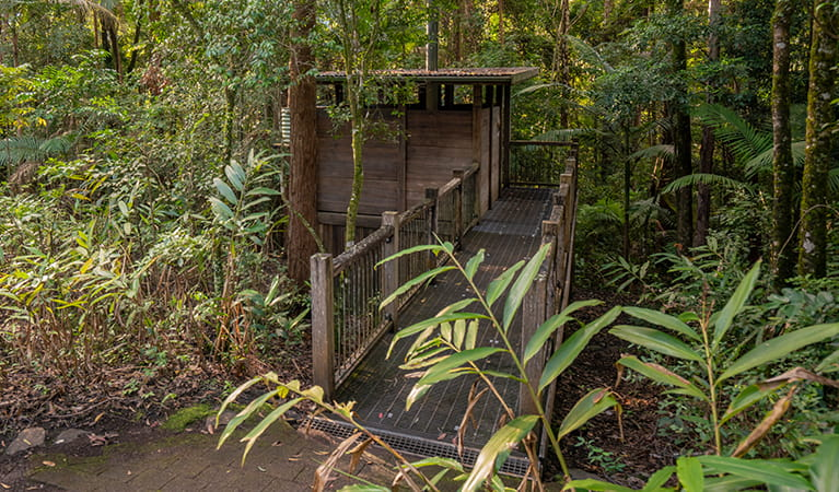 Wheelchair accessible toilet facilities, Sheepstation Creek campground, Border Ranges National Park. Photo: DPIE/ John Spencer
