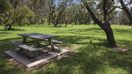 Picnic table in Borenore picnic area. Photo: Ian Brown