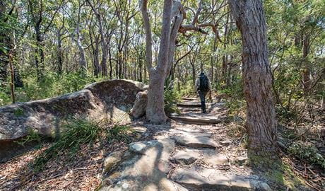 A man walking on the Bouddi Ridge Explorer trail. Photo: John Spencer/DPIE