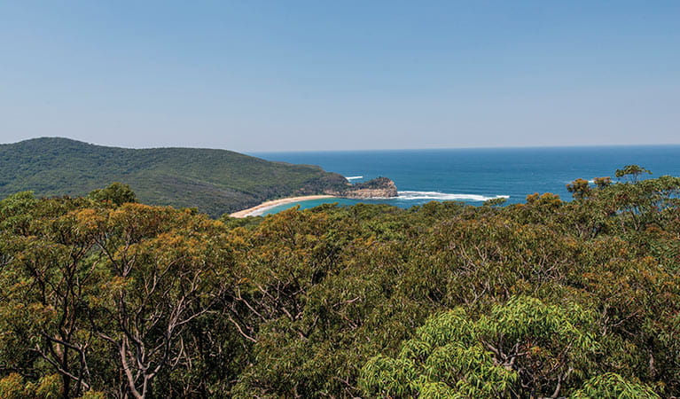 View of the ocean over the tree tops along the Bouddi Ridge Explorer trail. Photo: John Spencer/DPIE