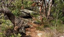 Rocks, grass and trees along the Box Head track. Photo: John Yurasek