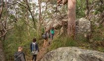 A group of friends bushwalking on Bullimah Spur track. Photo: John Spencer/DPIE