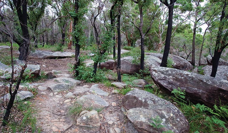 Rocks and trees along the Flannel Flower walking track. Photo credit: Nick Cubbin. <HTML>&copy; DPIE