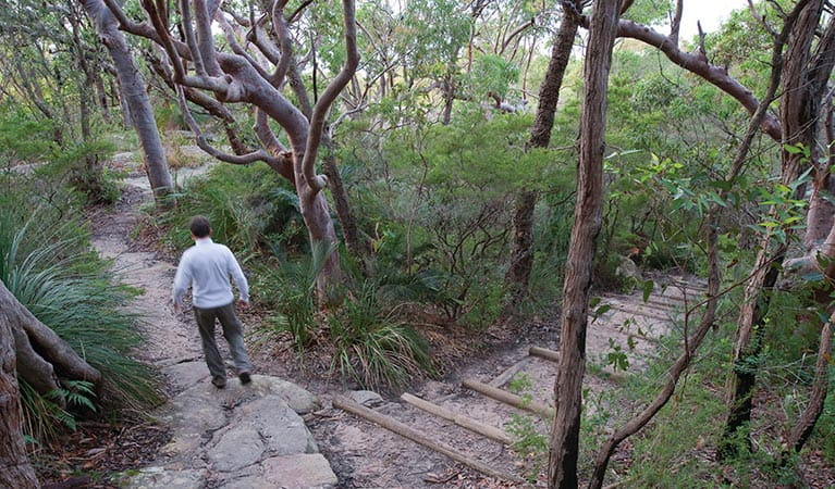 A man walking on Maitland Bay track in Bouddi National Park. Photo credit: Nick Cubbin. <HTML>&copy; OEH