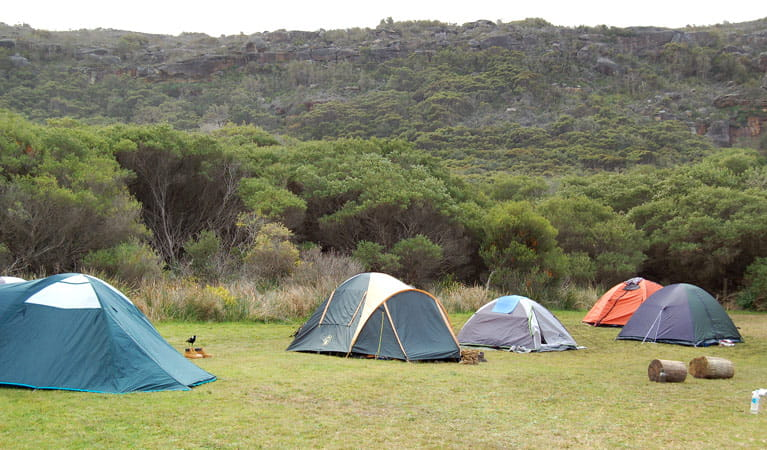 Tallow Beach campground, Bouddi National Park. Photo: Susan Davis