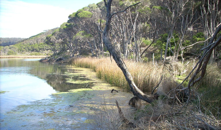 Bournda Lagoon, Bournda National Park. Photo: BECC/NSW Government