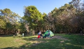 Hobart Beach campground, Bournda National Park. Photo: BECC