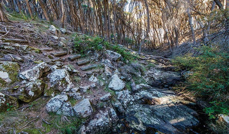 Rocky path through trees on Kangarutha walking track. Photo: John Spencer/DPIE