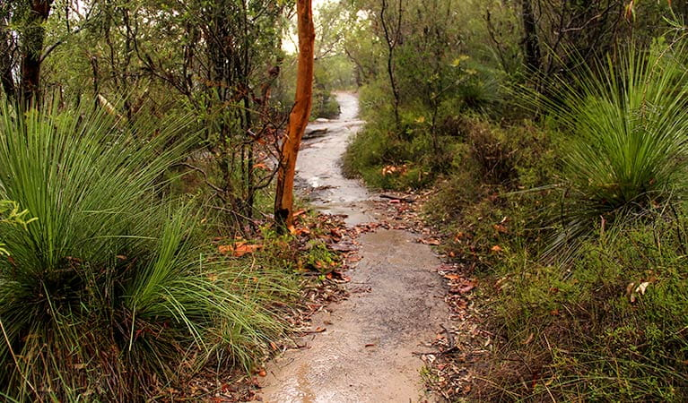 Great North walk, Brisbane Water National Park. Photo: John Yurasek