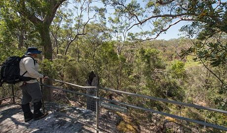 Mooney Mooney nature walk, Brisbane Water National Park. Photo: John Spencer