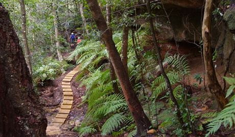 Piles Creek loop walking track in Brisbane Water National Park. Photo: B Collier/OEH