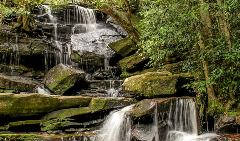 Somersby Falls walking track, Brisbane Water National Park. Photo: John Yurasek