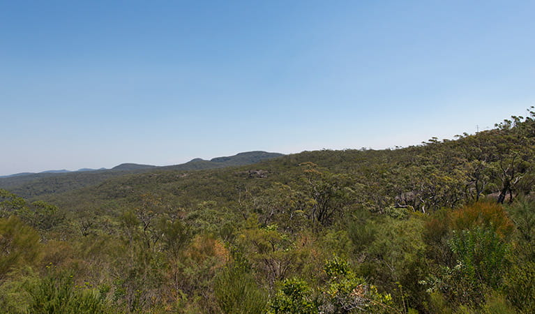 Tommos loop and Rocky Ponds cycling loop, Brisbane Water National Park. Photo: John Spencer