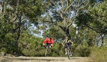 Cyclists enjoying a bike ride along Tommos loop and Rocky Ponds cycling loop. Photo: Evolving images