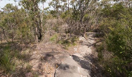 Wondabyne to Patonga walking track, Brisbane Water National Park. Photo: John Spencer