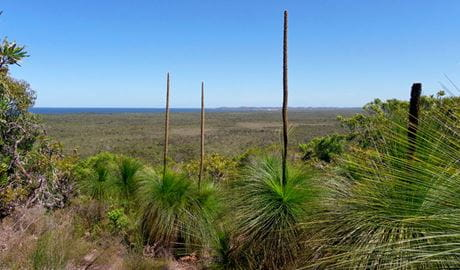 Broadwater inland lookout, Broadwater National Park. Photo: L Walker