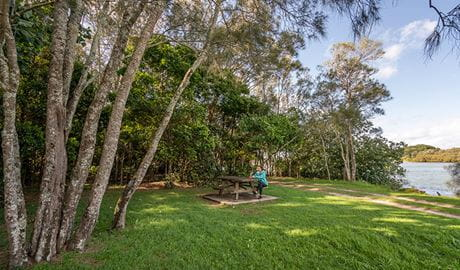 Brunswick River picnic area, Brunswick Heads Nature Reserve. Photo: L Cameron/NSW Government