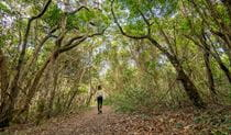 A woman walking along North Head walking track beneath a canopy of trees in Brunswick Heads Nature Reserve. Photo: John Spencer/DPIE