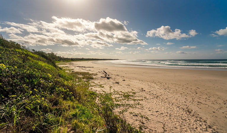 Beach area along North Head walking track in Brunswick Heads Nature Reserve. Photo: John Spencer/DPIE