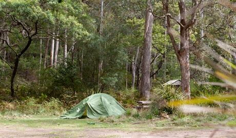 Long Gully picnic area pitch, Budawang National Park. Photo: Lucas Boyd