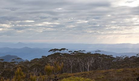 Mount Budawang trail top, Budawang National Parl. Photo: Lucas Boyd
