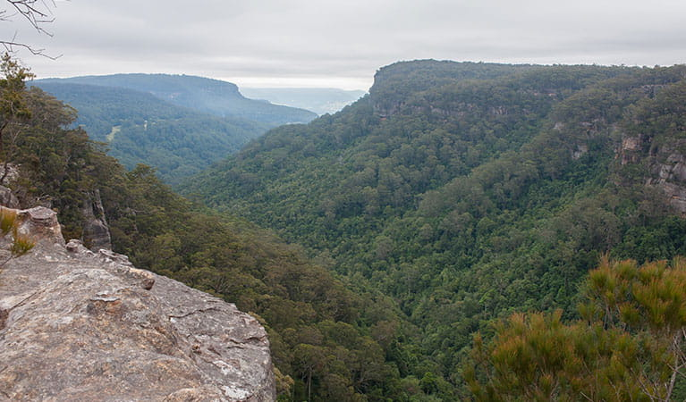 Views into the valley from Budderoo Plateau, Budderoo National Park. Photo credit: Michael Van Ewijk © DPIE