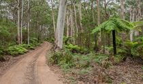 The dirt Budderoo track winds through forest in Budderoo National Park. Photo credit: Michael Van Ewijk © DPIE