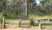 Carrington Falls campground, Budderoo National Park. Photo: Chris Keyzer/OEH