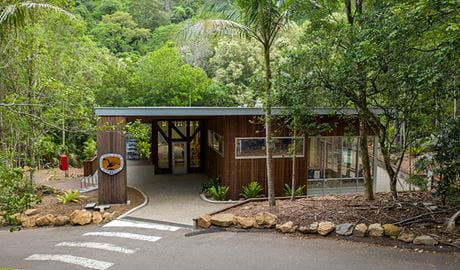 Exterior of Minnamurra Rainforest Centre with zebra crossing in the foreground and rainforest in the background. Photo: John Spencer © DPIE