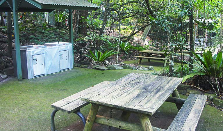 Picnic table on paved area with covered gas barbecues, in a rainforest setting of ferns and trees. Photo credit: Geoff Saunders © DPIE