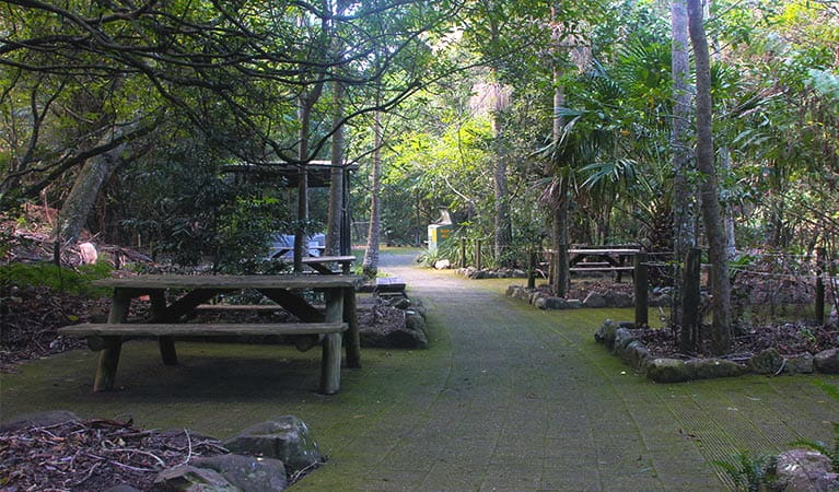 Several picnic tables on paving set amongst lush rainforest plants and trees in Budderoo National Park. Photo credit: Geoff Saunders © DPIE