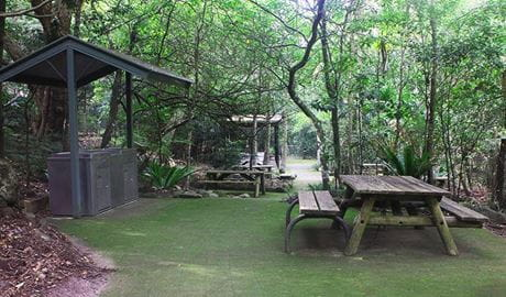 Picnic tables on paving with covered gas barbecue area, surrounded by rainforest vegetation. Photo credit: Geoff Saunders © DPIE