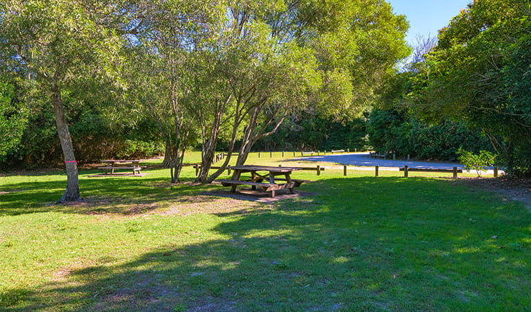 Back Beach picnic area surrounded by coastal bushland, showing picnic tables among trees and shade.  Photo: Jessica Robertson/OEH.