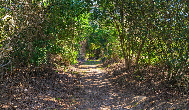 Path from picnic area to beach through thick coastal vegetation.   Photo: Jessica Robertson/OEH.