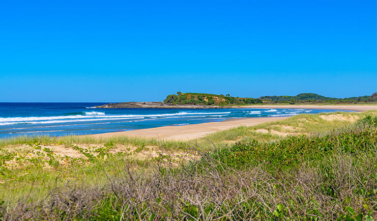 View of surf and rocky headland over beach and dune vegetation.  Photo: Jessica Robertson/OEH.
