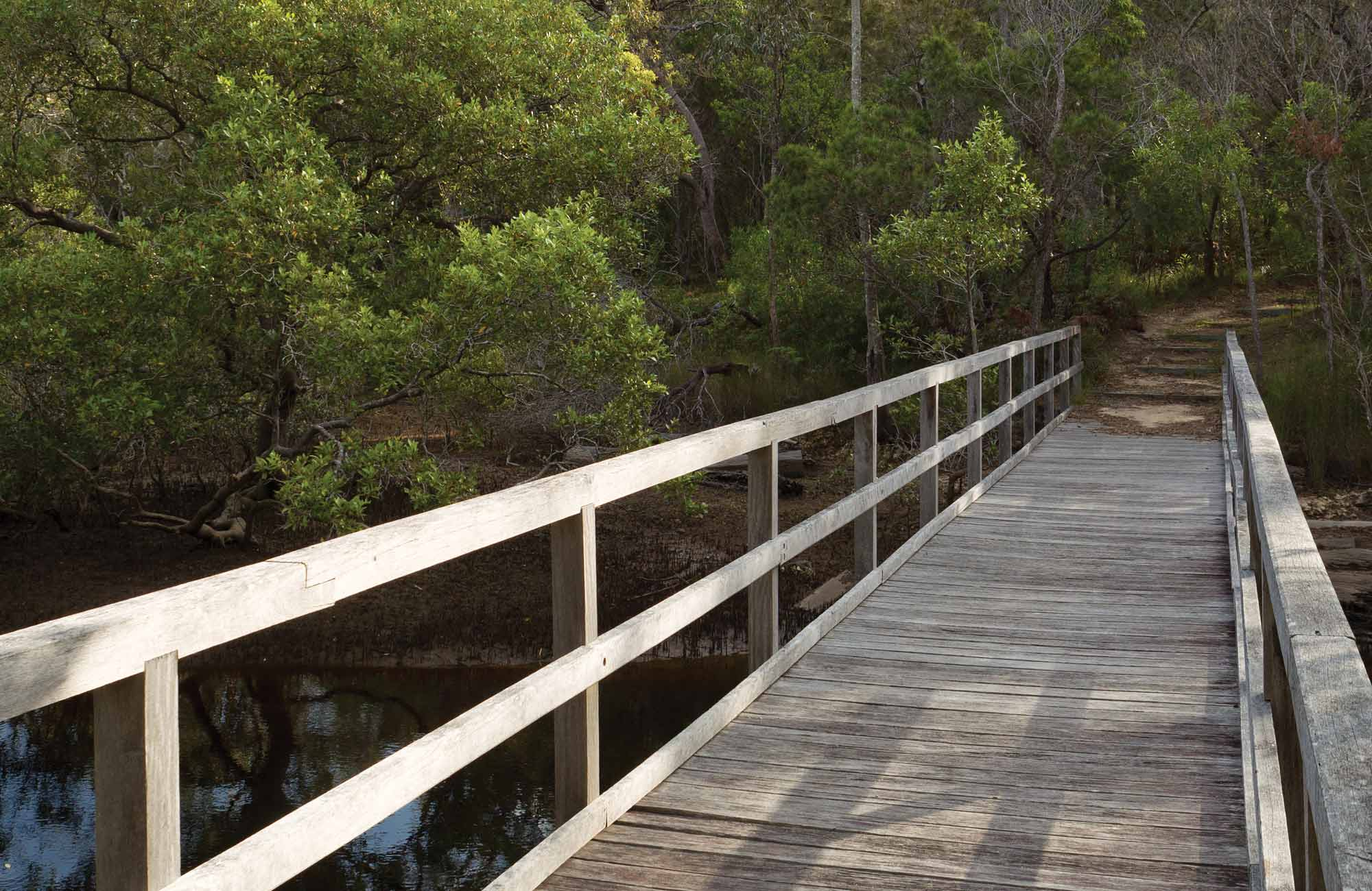 Gummingurrah walking track, Bundjalung National Park. Photo: Rob Cleary/NSW Government