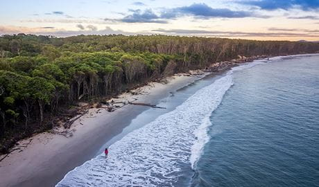 Aerial view of a woman walking along the tree-lined beach near Woody Head campground, Bundjalung National Park. Photo: John Spencer/OEH