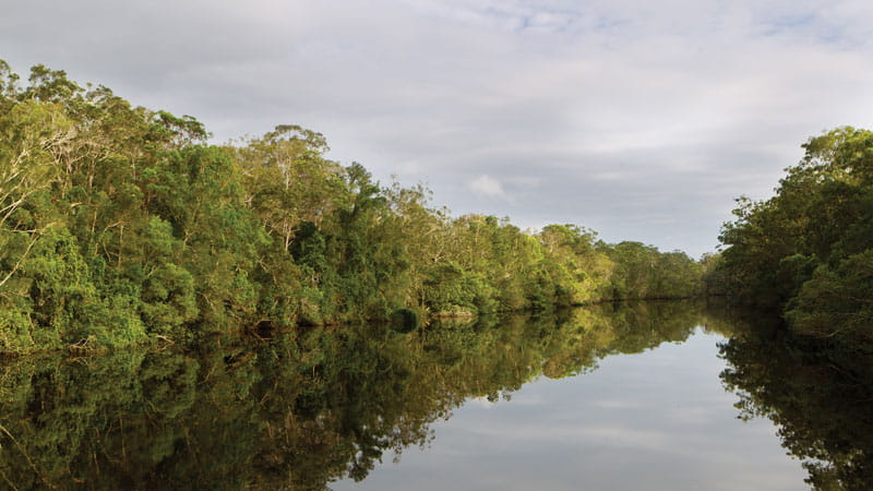 Trees along the banks of the Esk river. Photo: Rob Cleary