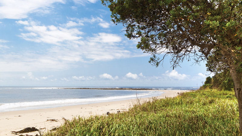 Beach in Iluka Nature Reserve, Bundjalung National Park. Photo: Rob Cleary