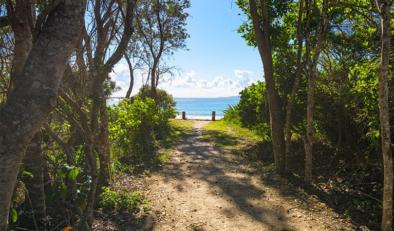 Sandy track from picnic area to Shark Bay with coastal vegetation on either side. Photo: Jessica Robertson/OEH.