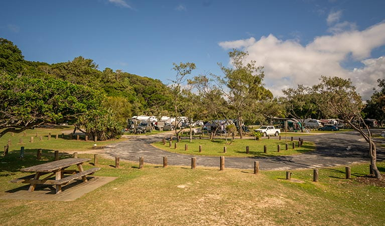 Woody Head campground and picnic area, with caravans and tents pitched by holiday makers, Bundjalung National Park. Photo: John Spencer/OEH