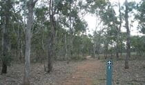 Green Track, Bungonia National Park. Photo: Audrey Kutzner/NSW Government