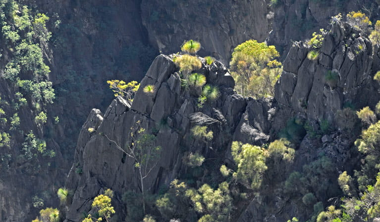 Adams Lookout, Bungonia National Park. Photo: Ford Kristo/NSW Government