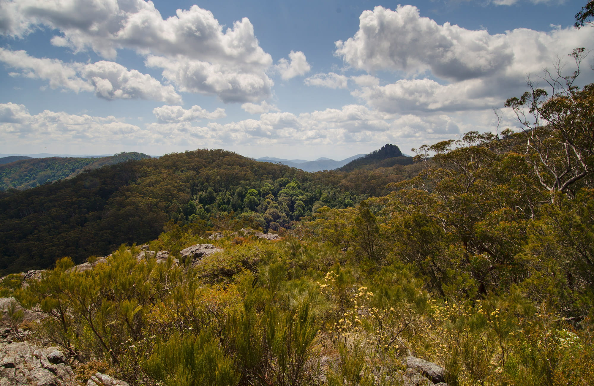 View of mountainous landscape including Kemps Pinnacle from Hoppy's lookout, in Oxley Wild Rivers National Park, with wildflowers in the foreground. Photo: John Spencer/OEH.