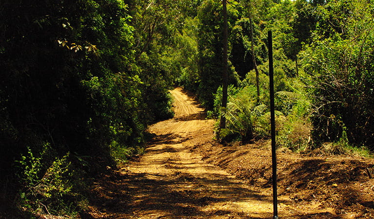 Unpaved track through thick woodland. Photo: Piers Thomas/OEH.