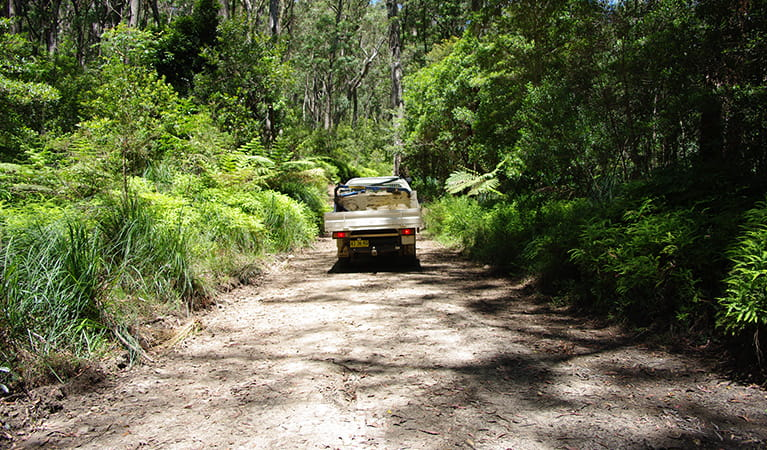 4WD vehicle on unsealed road surrounded by lush forest.  Photo: Piers Thomas/OEH