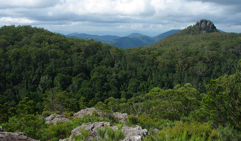 View of forest-covered mountains, including rocky Kemp's Pinnacle, from Hoppy's lookout.  Photo: Piers Thomas/OEH