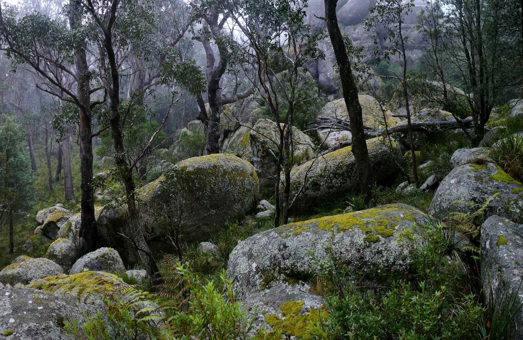 Boulders along Cathedral Rock track in Cathedral Rock National Park. Photo: A Ingarfield/OEH