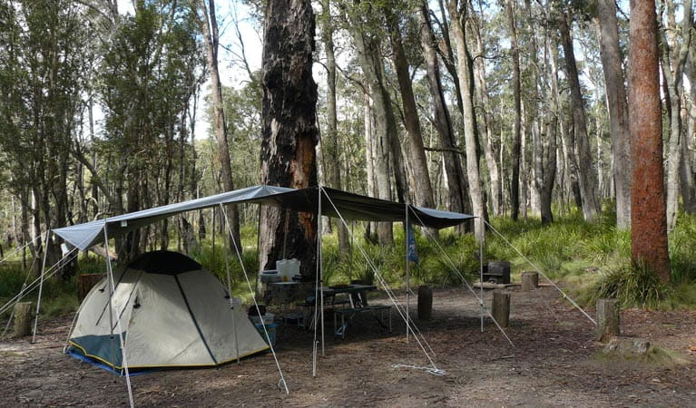 A tent set up at Barokee campground, Cathedral Rock National Park. Photo: Barbara Webster/OEH