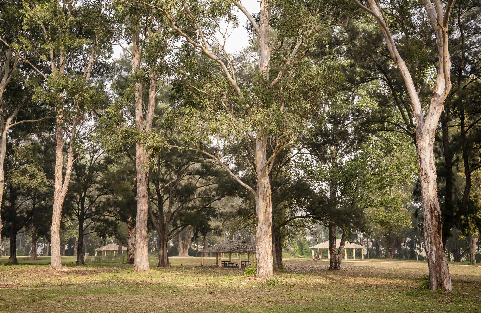 Picnic sheds spread out across Cattai Farm picnic area, surrounded by tall eucalypt trees, in Cattai National Park. Photo: John Spencer/OEH
